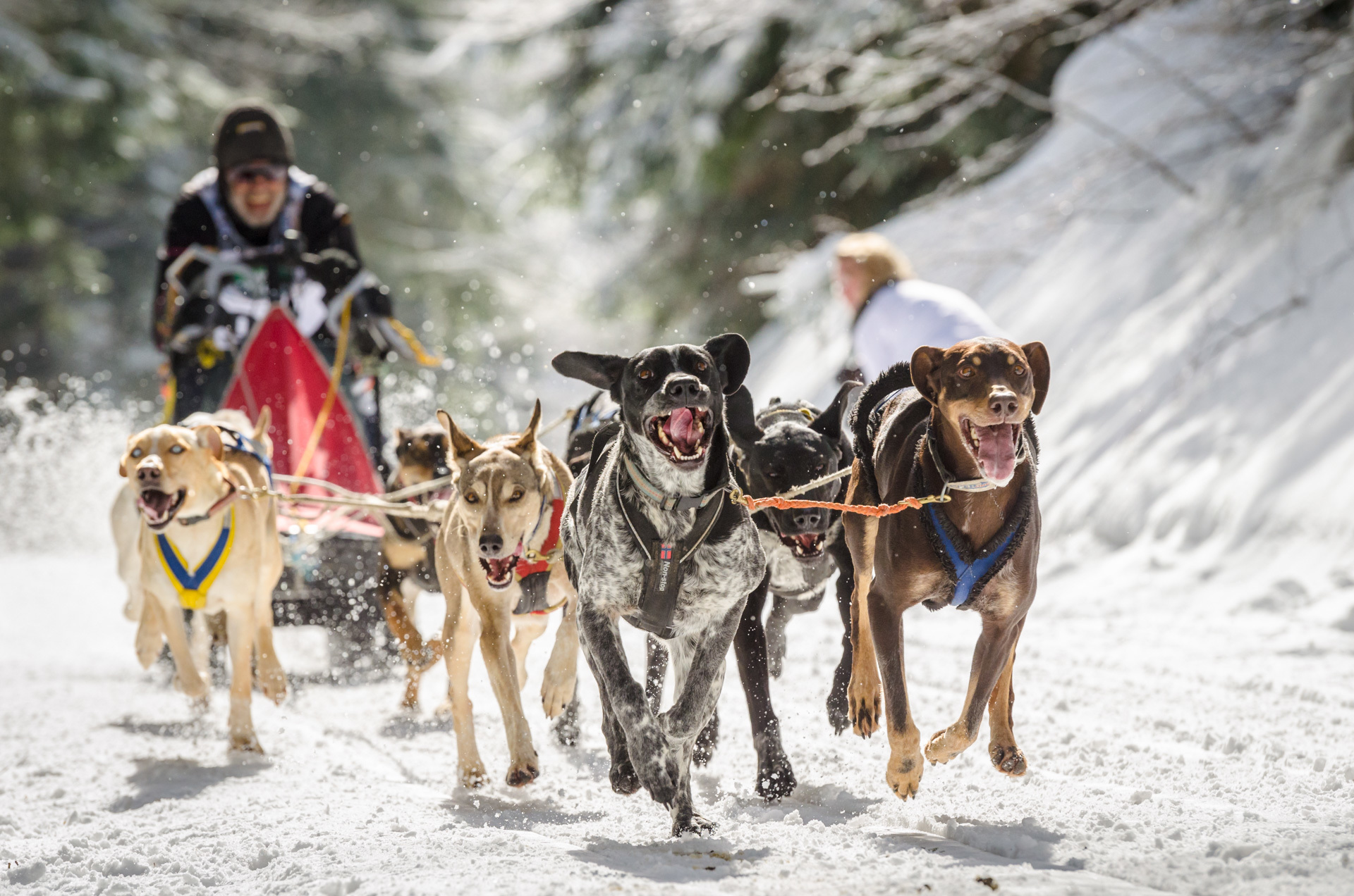 chasing down the world u0027s greatest dogsledder vice sports