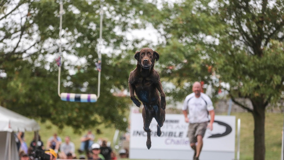 Scenes from the Incredible Dog Challenge, the Friendliest, Goofiest Competition on Earth