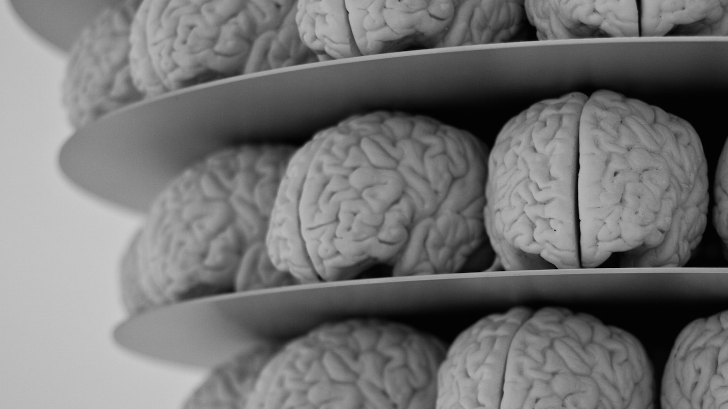 Could Claims That '20 Years of Brain Studies Are Wrong' Be Wrong?