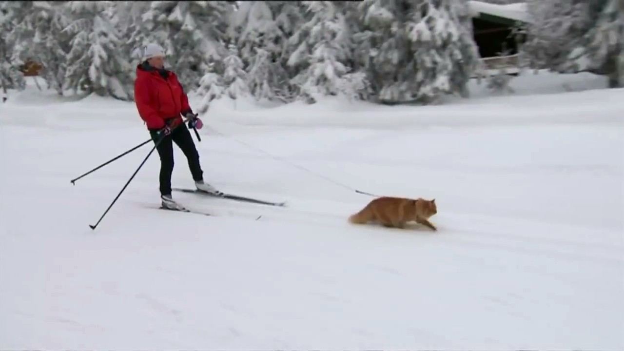 Jesper the Skiing Cat? Sure, Why the Hell Not.