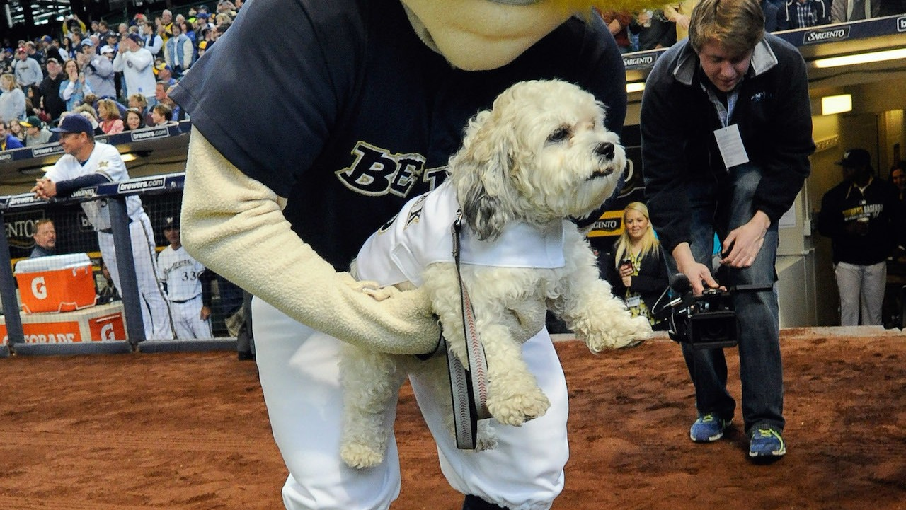 Brewers Confirm Hank the Dog is Alive and Well