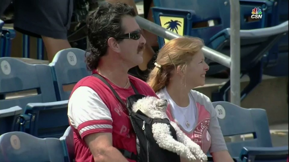 Dog at Phillies Game Is Living Its Best Life