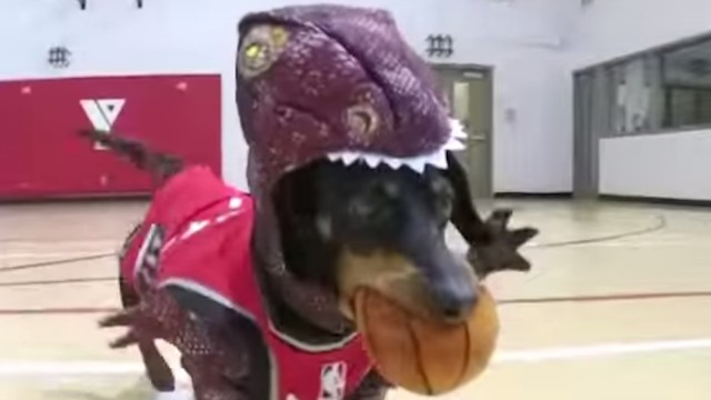 Watch This Dog Audition for a Spot in the Raptors' Lineup