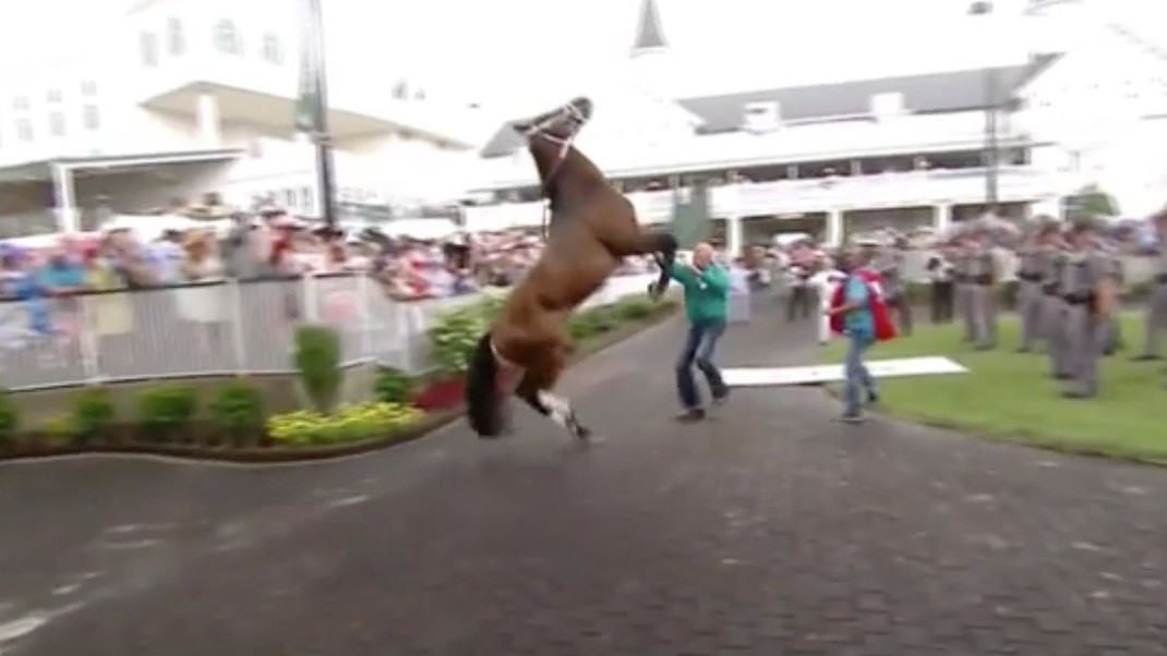 Kentucky Derby Horse Injures Itself Because, Ultimately, it is a Dumb Animal