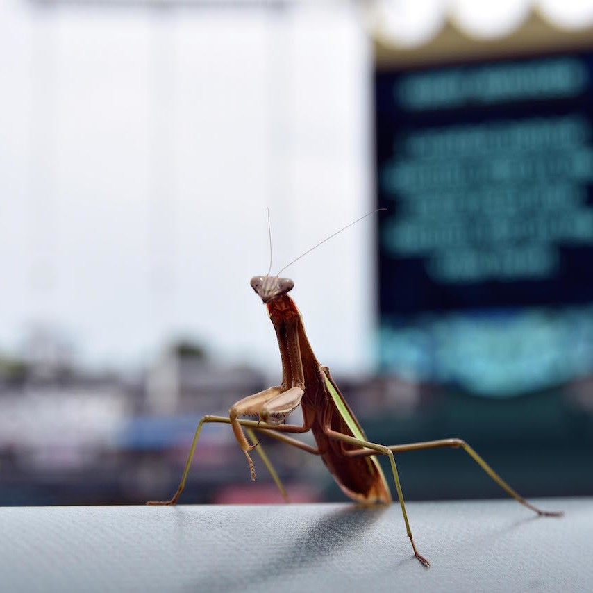 Royals-dont-have-a-prayer-after-rally-mantis-dies-1471277968.jpg?crop=0
