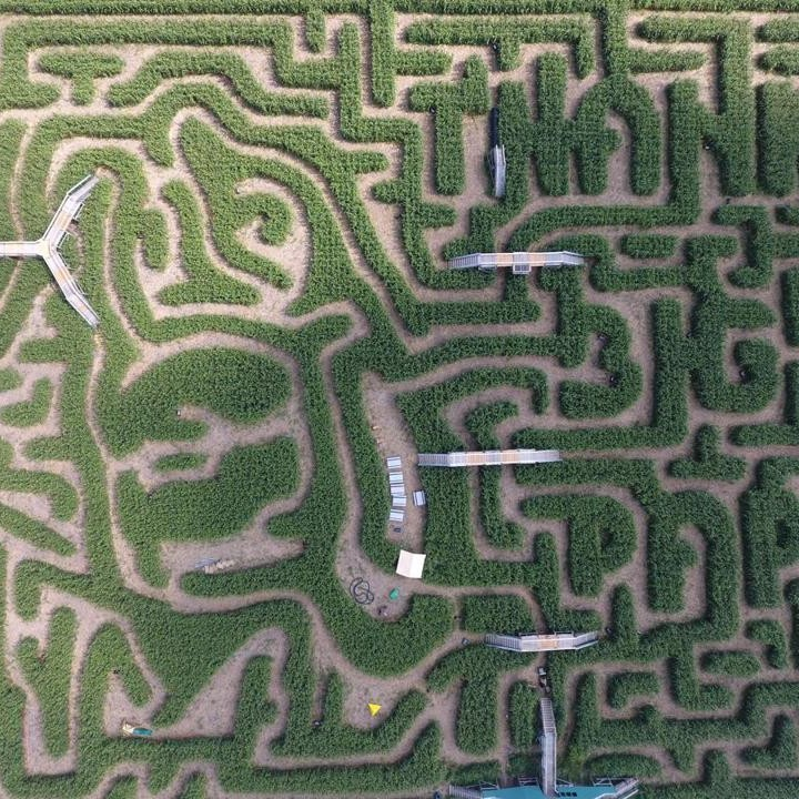Apparently-david-ortizs-face-is-carved-into-this-corn-maze-of-lies-1472233235.jpg?crop=0