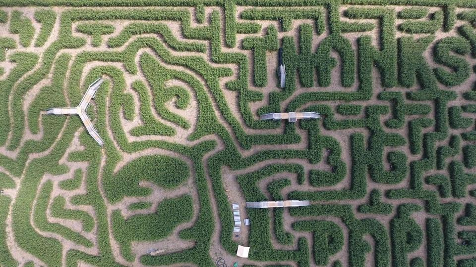 Apparently David Ortiz's Face is Carved into this Corn Maze of Lies