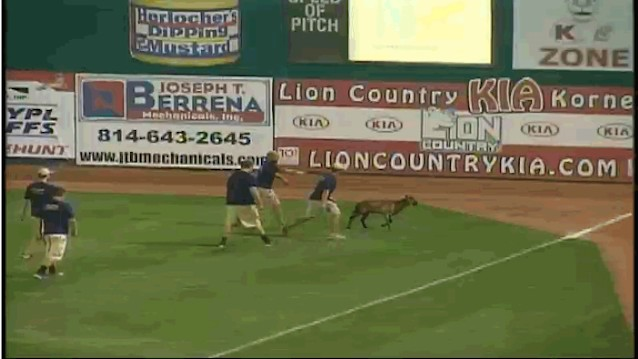 Boy Howdy, Did a Goat Ever Just Run Amok During a Minor League Game