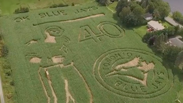 Canadian Farm Recreates Jose Bautista Bat Flip with Epic Corn Maze