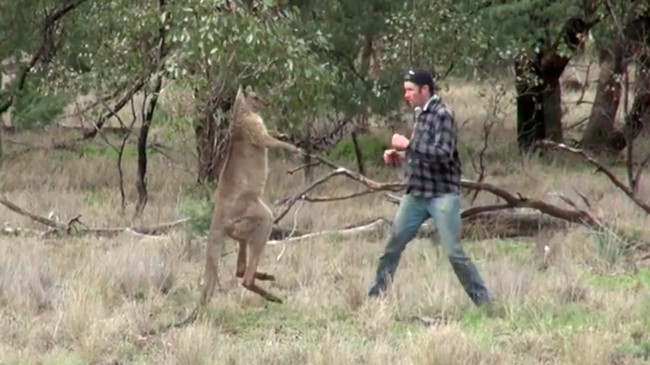 Man Punches Kangaroo, Saves His Dog From Getting Choked Out
