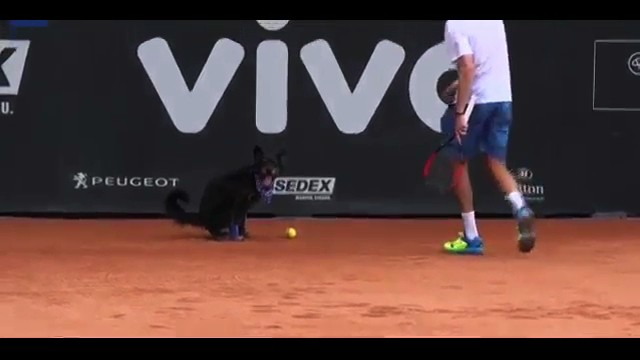 Good Dogs Fetch Tennis Balls at the Brazil Open