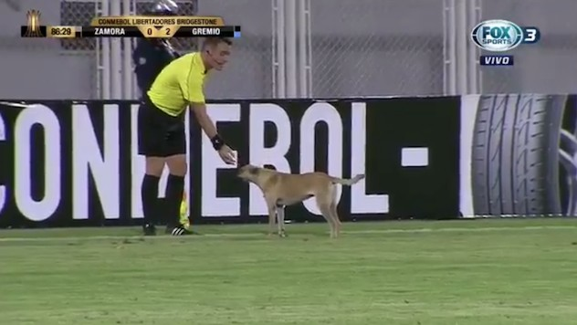 Wonderpup Invades Pitch During Copa Libertadores, Receives Good Pats