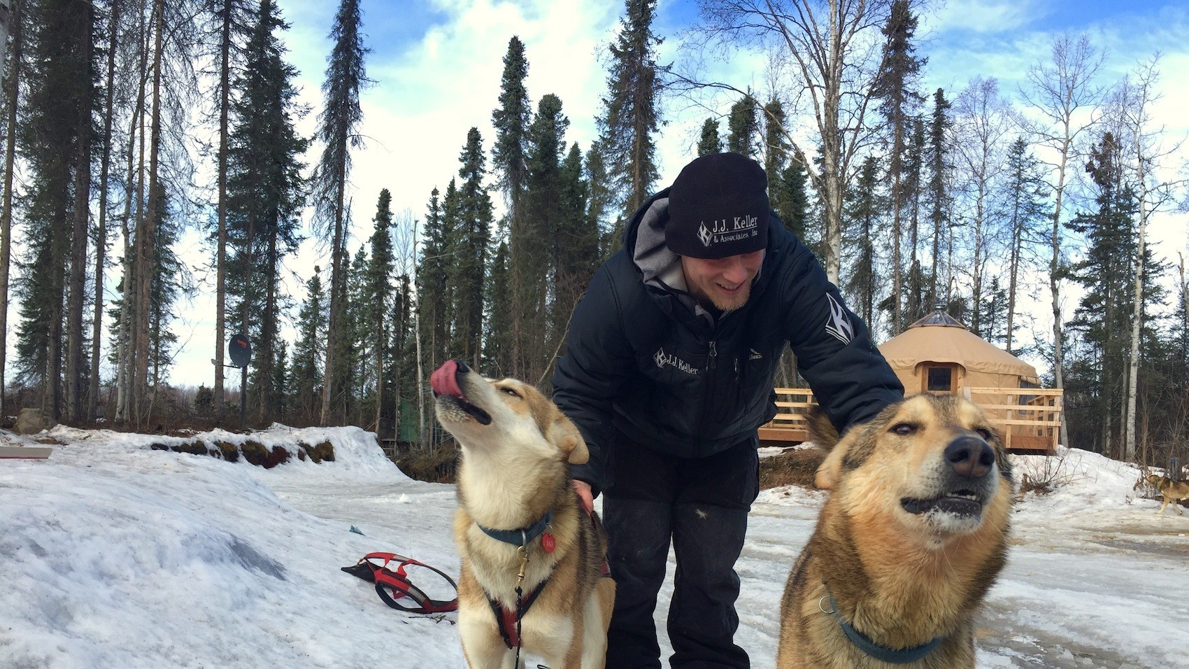 Running and Humping: Dogs of the Iditarod